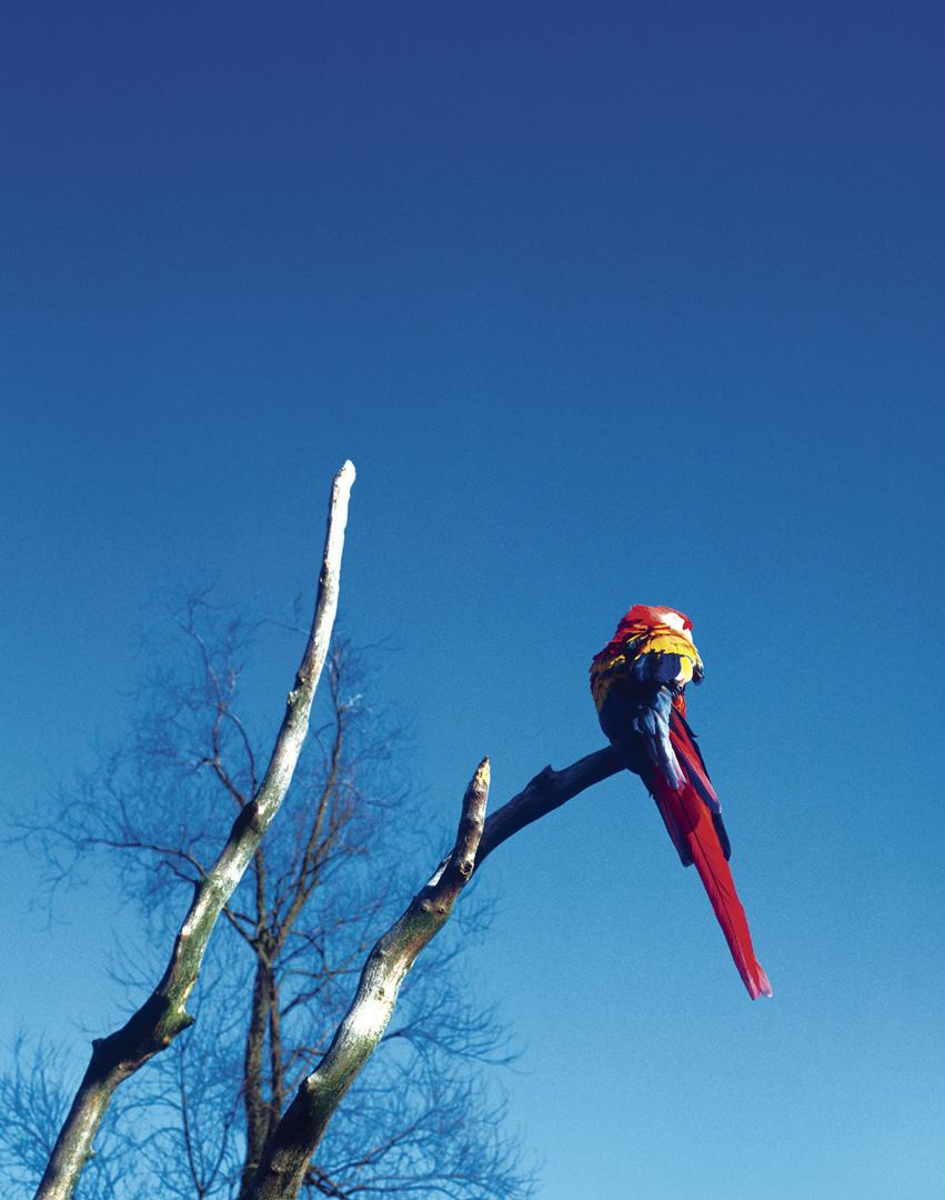 Birds_044_Diadigi4
