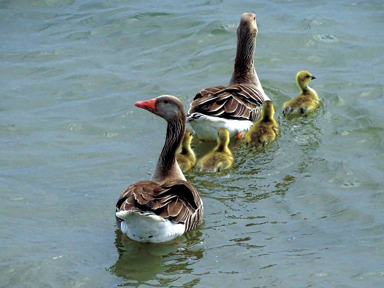 Birds_074_N18.2.23