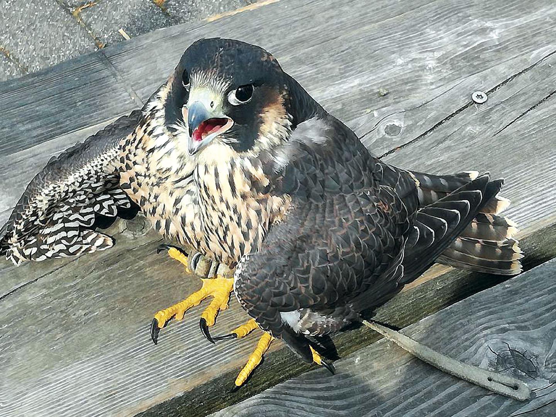 Birds_110_I18.1.88