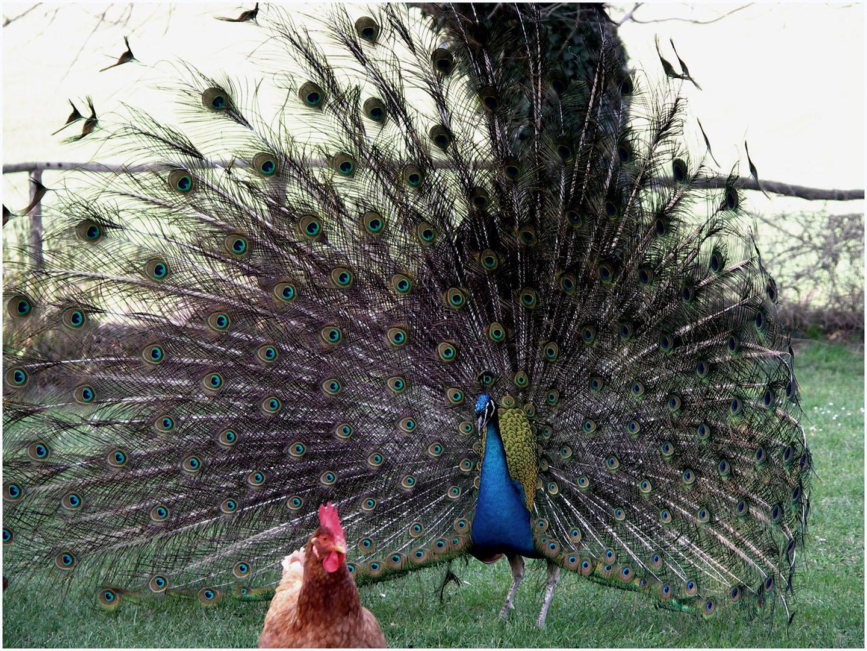 Birds_116_T006_(18)_kl