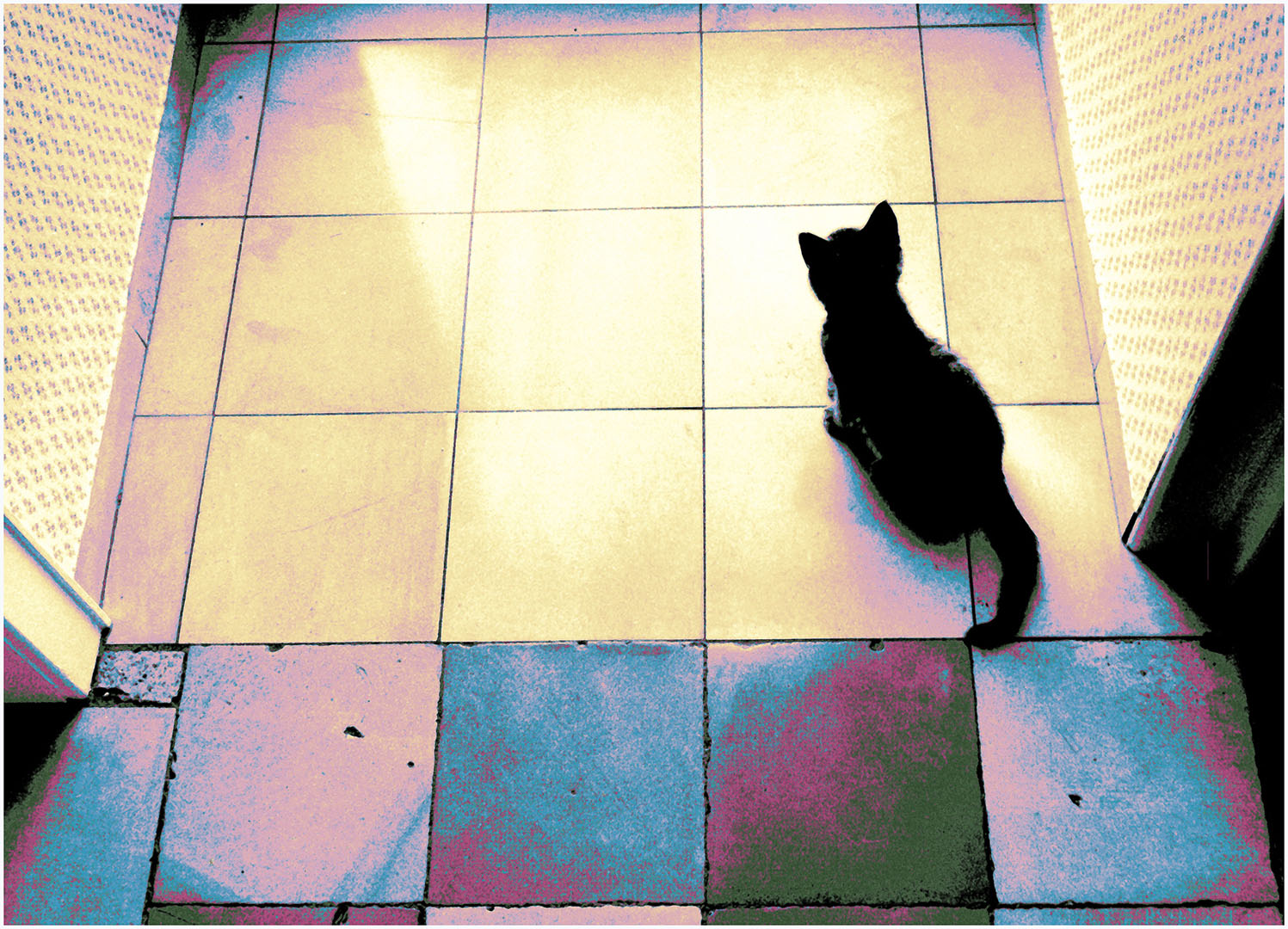 Cats_and_Dogs_011_Tiere49b