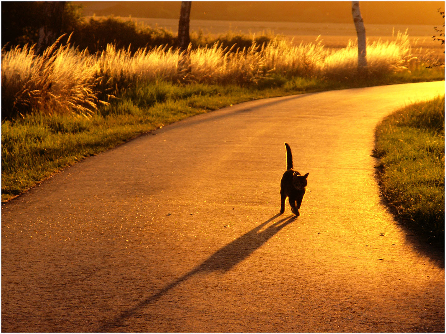 Cats_and_Dogs_082_Ahrenhorst_(11)