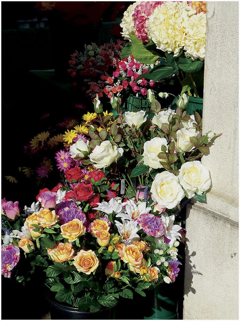 Flowers_001_I17.26.37