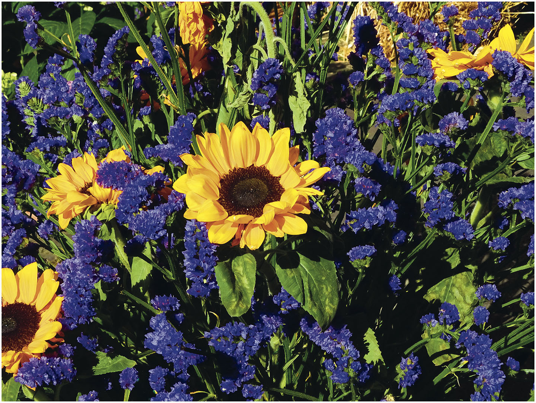 Flowers_018_I17.8.92