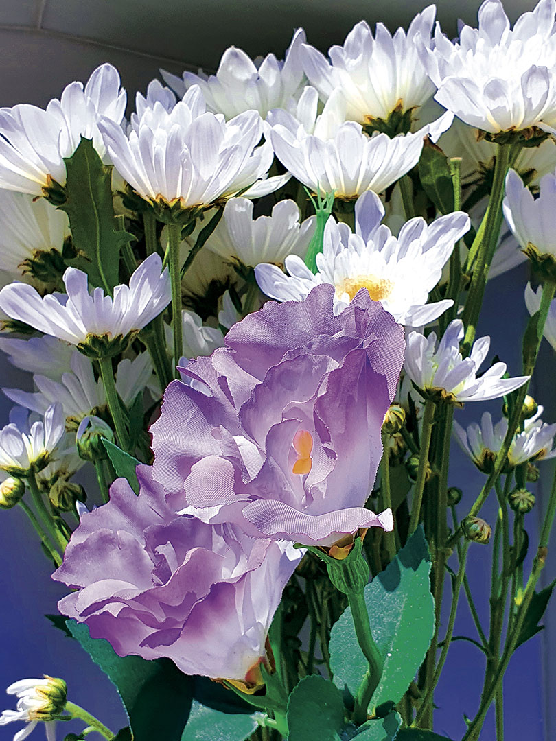 Flowers_020_Flowers_11