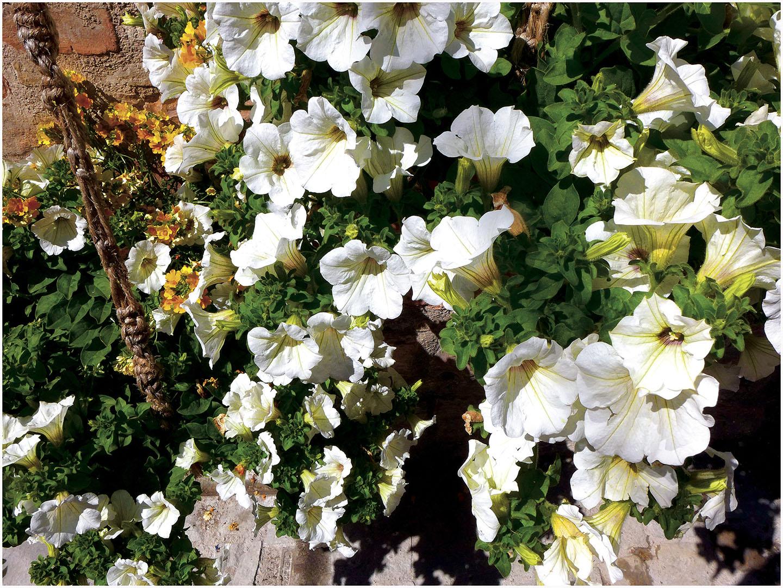 Flowers_026_I17.4.92