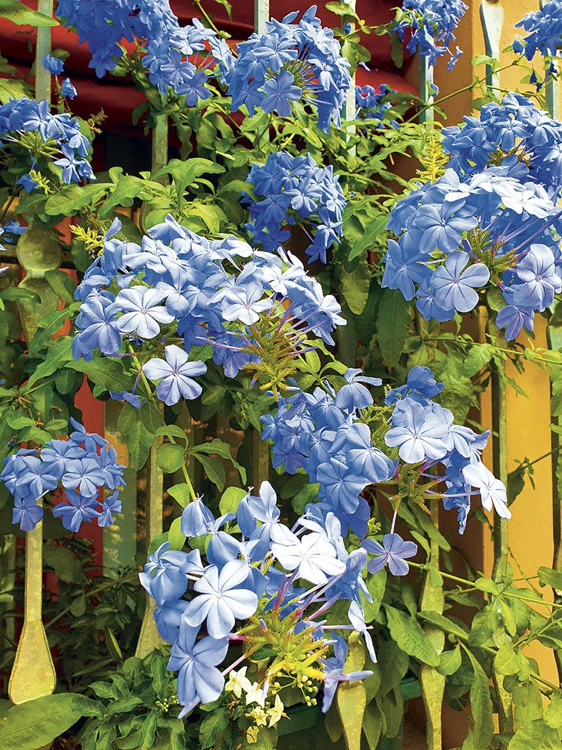 Flowers_033_Flowers_13