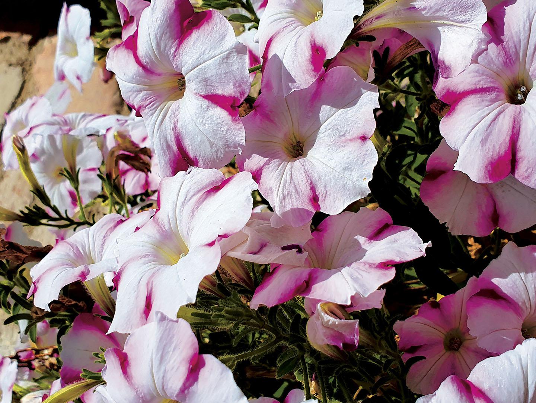 Flowers_042_I19.12.61