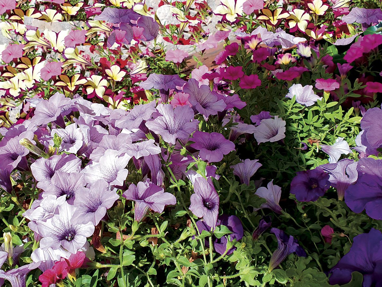 Flowers_045_I19.12.56