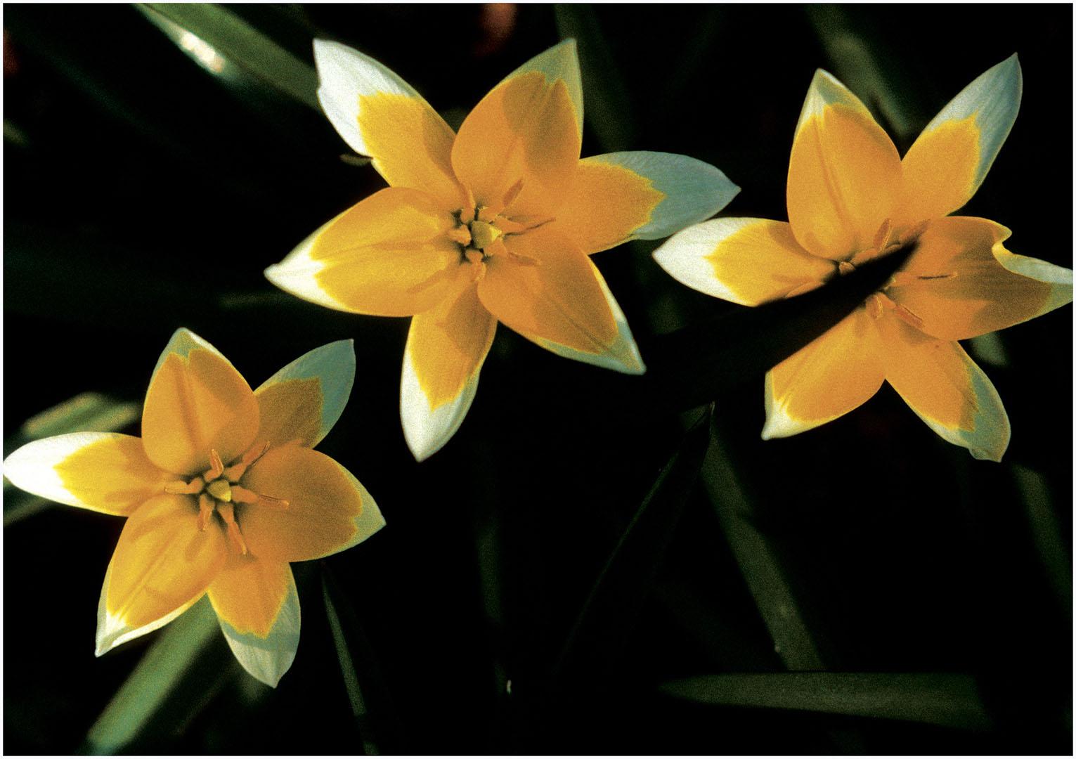 Flowers_056_Diadigi3.44
