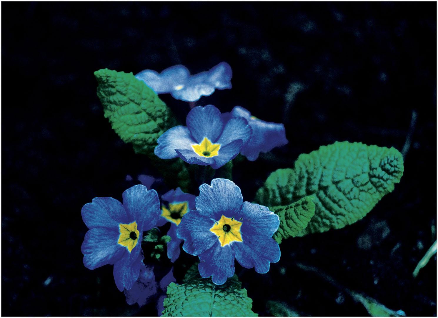 Flowers_059_Diadigi3.50