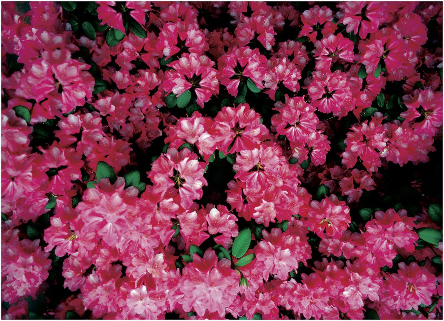 Flowers_061_Diadigi3.54