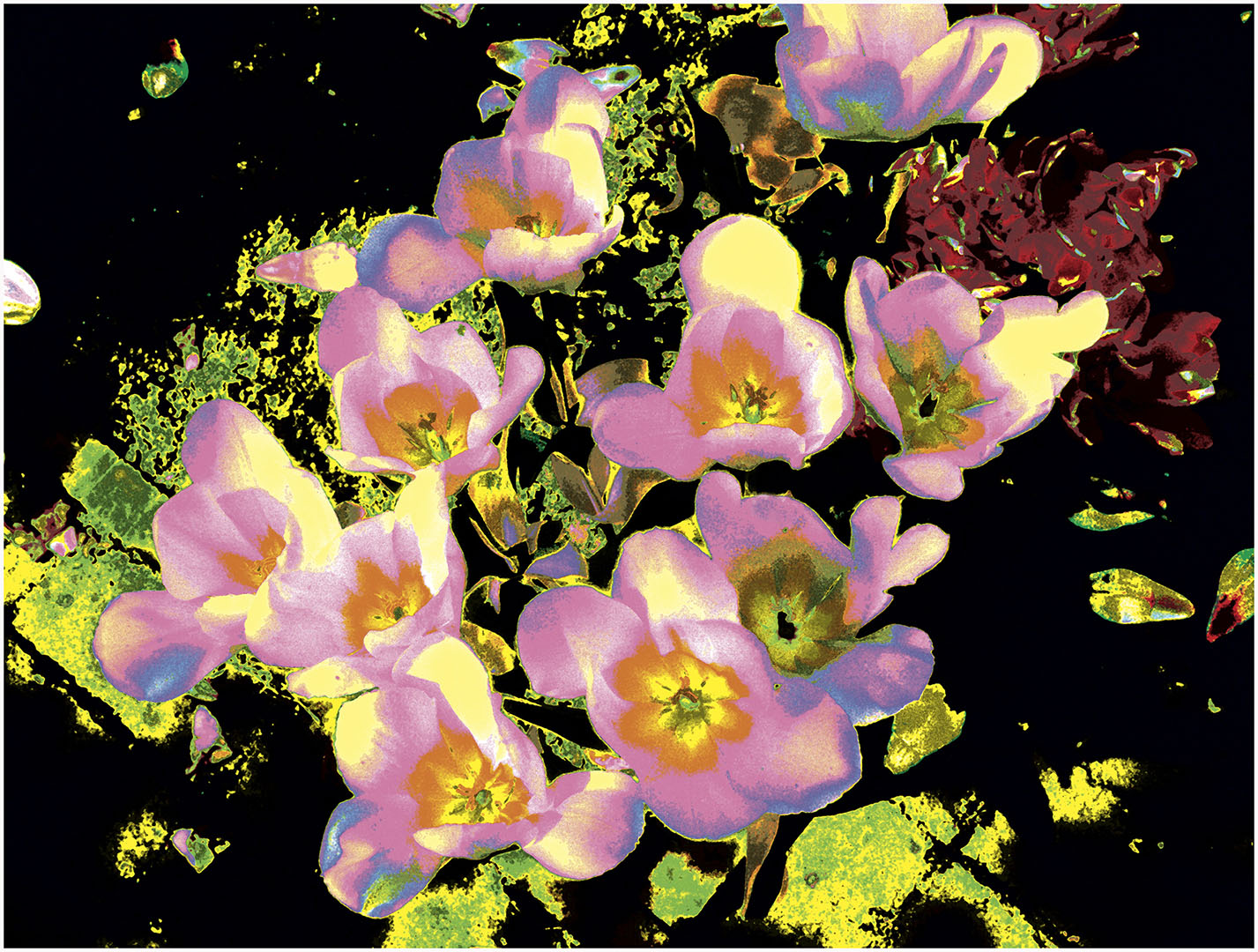 Flowers_063_ROX98