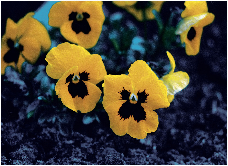 Flowers_064_Diadigi3.58