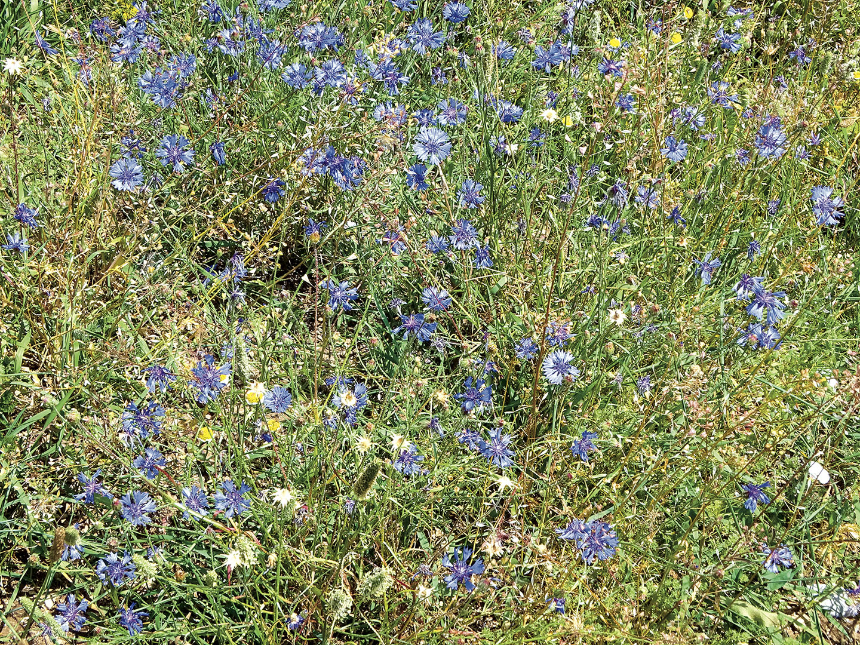 Flowers_127_I18.8.80
