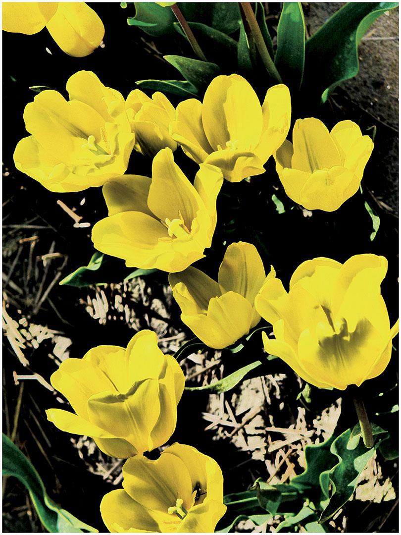 Flowers_142_H16.3.27