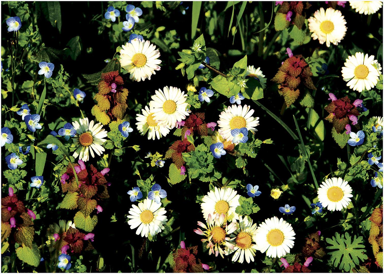 Flowers_146_I12.1-66
