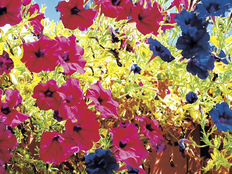 Flowers_150_I18.14.46