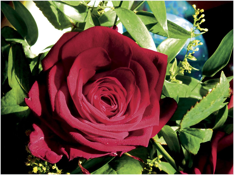 Flowers_184_M16.2.40