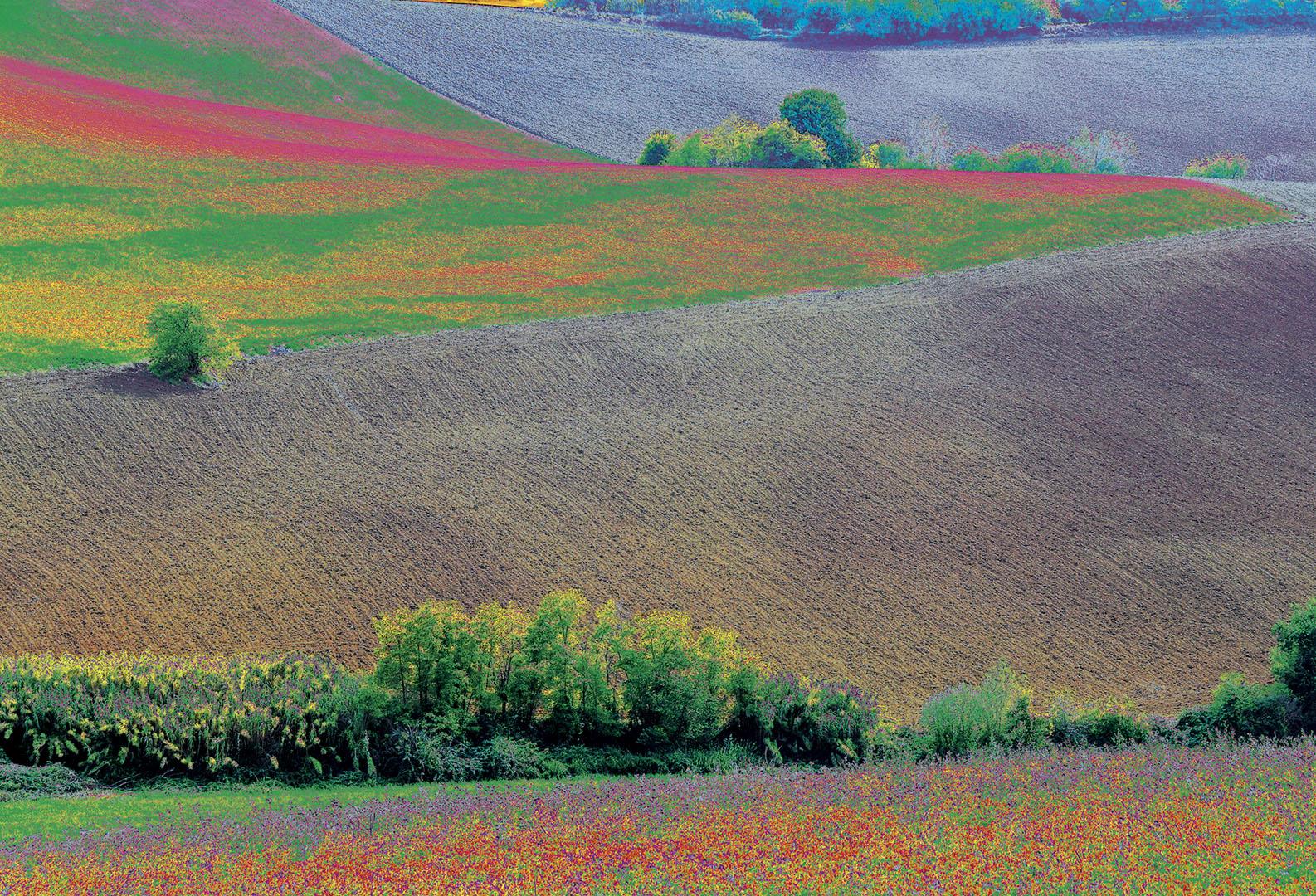 Landscapes_262_I08-8.18