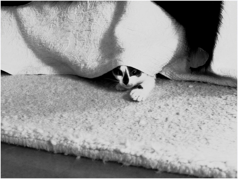 Lazy_Cats_018_K_64