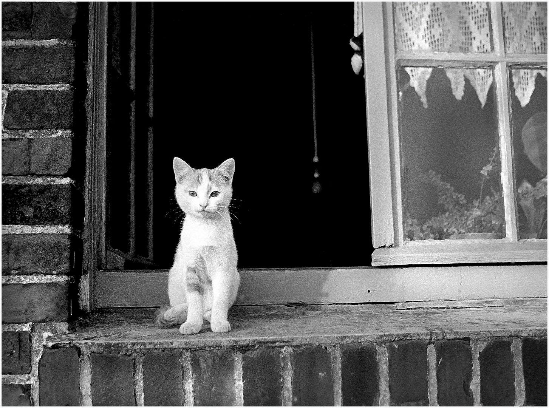 Lazy_Cats_029_K1.77