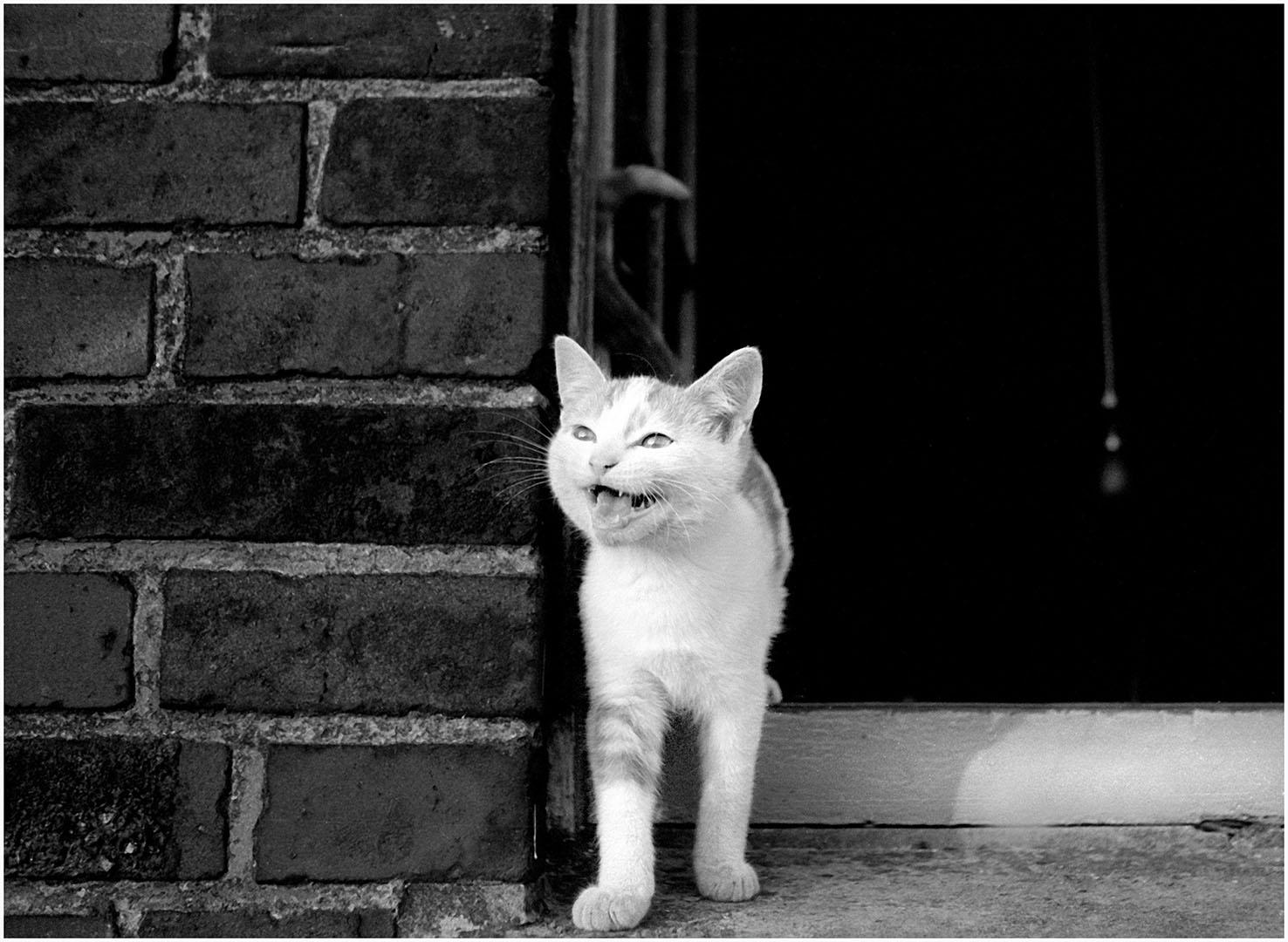 Lazy_Cats_033_K1.78