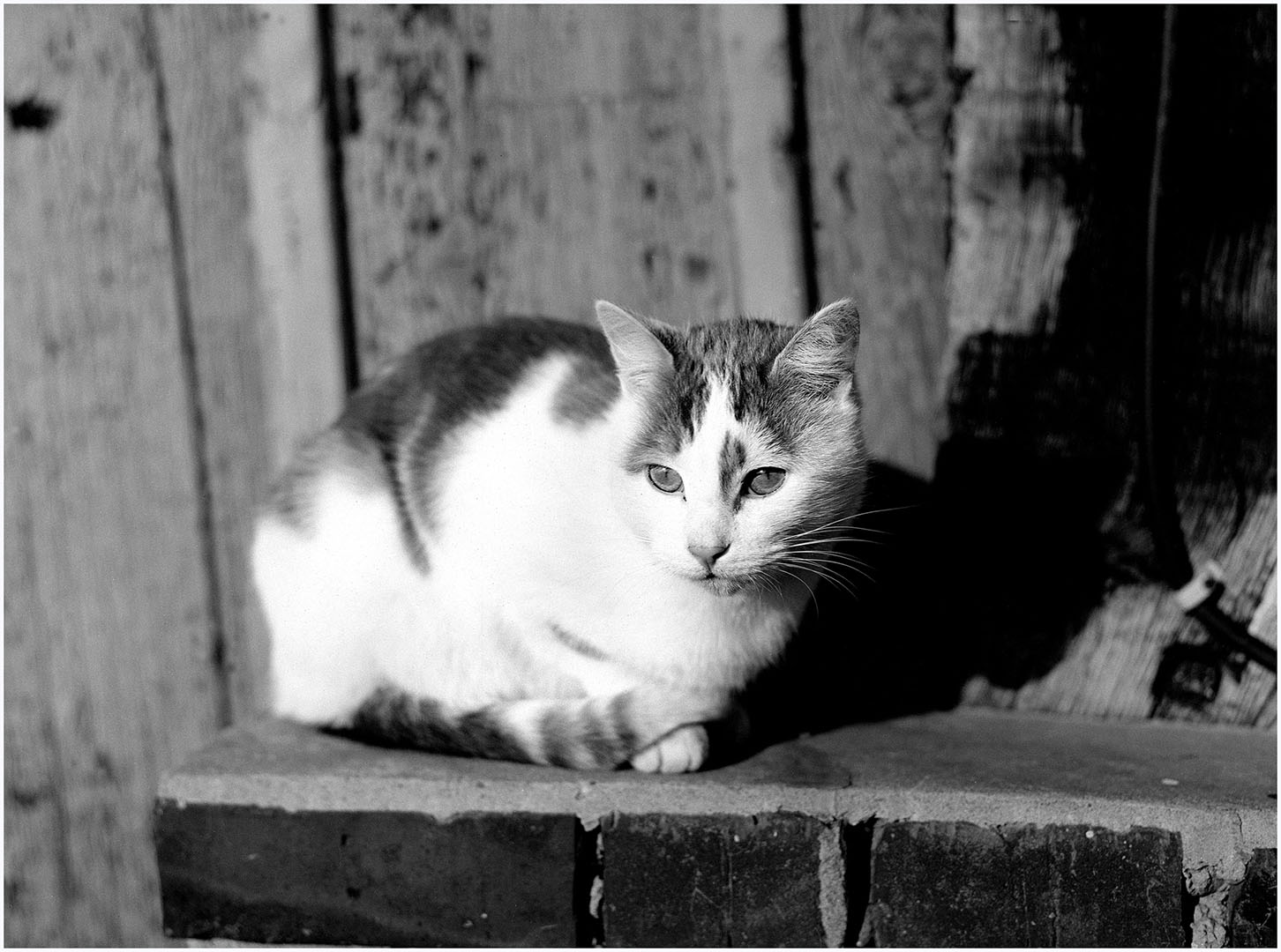 Lazy_Cats_035_K1.23