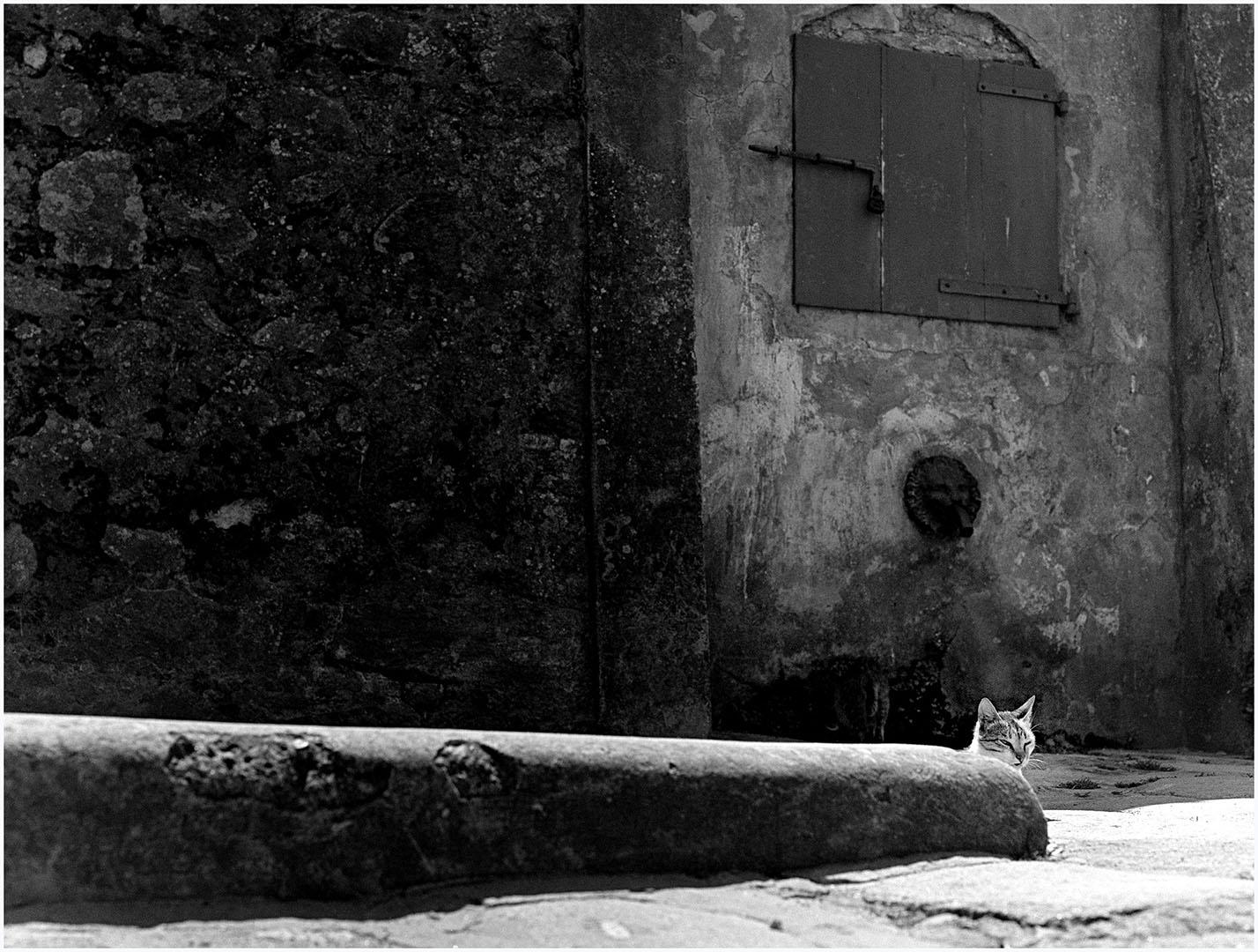 Lazy_Cats_041_K1.10