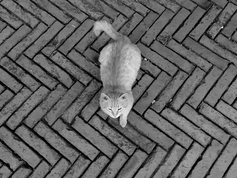 Lazy_Cats_066_I18.21.58