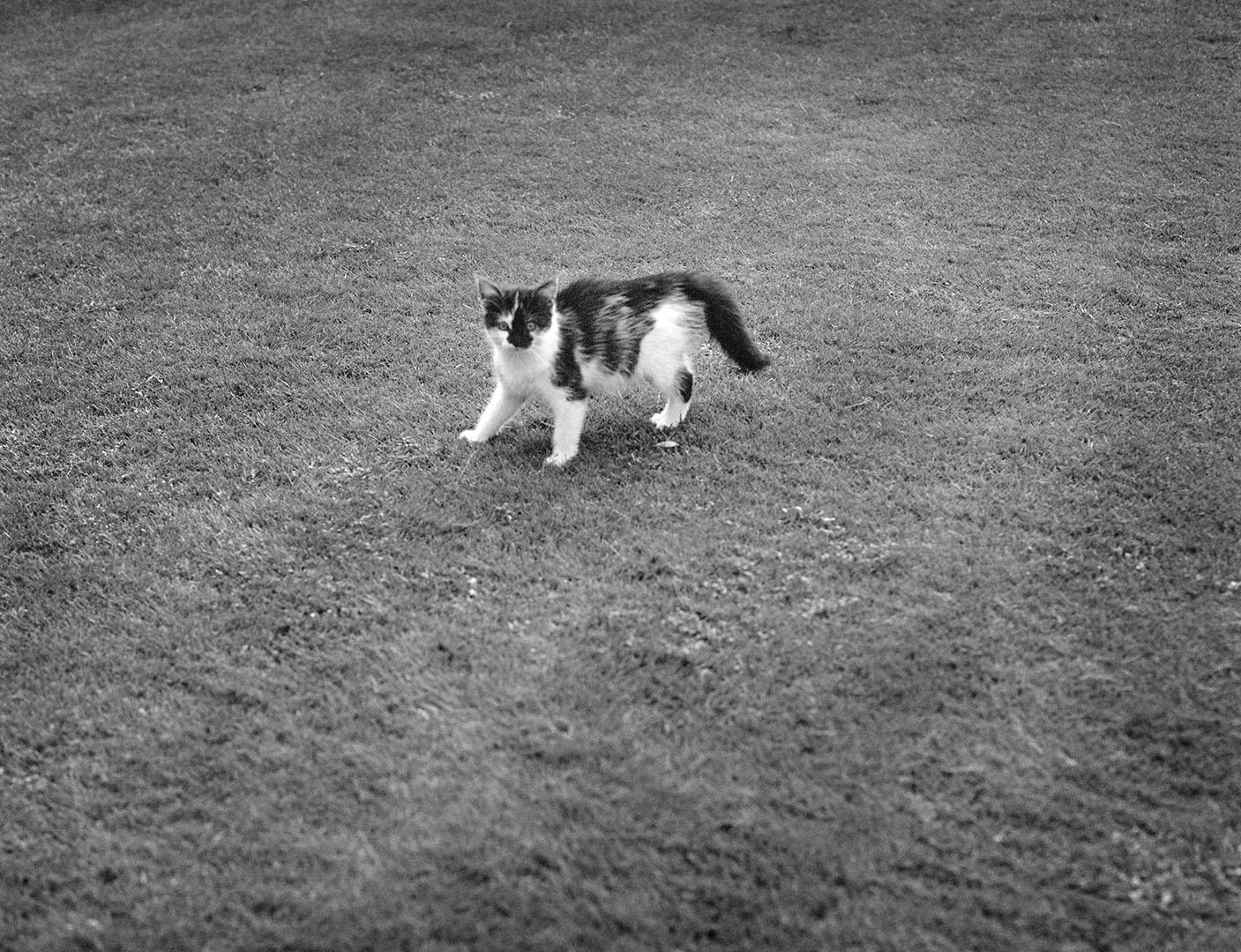 Lazy_Cats_095_K1.20