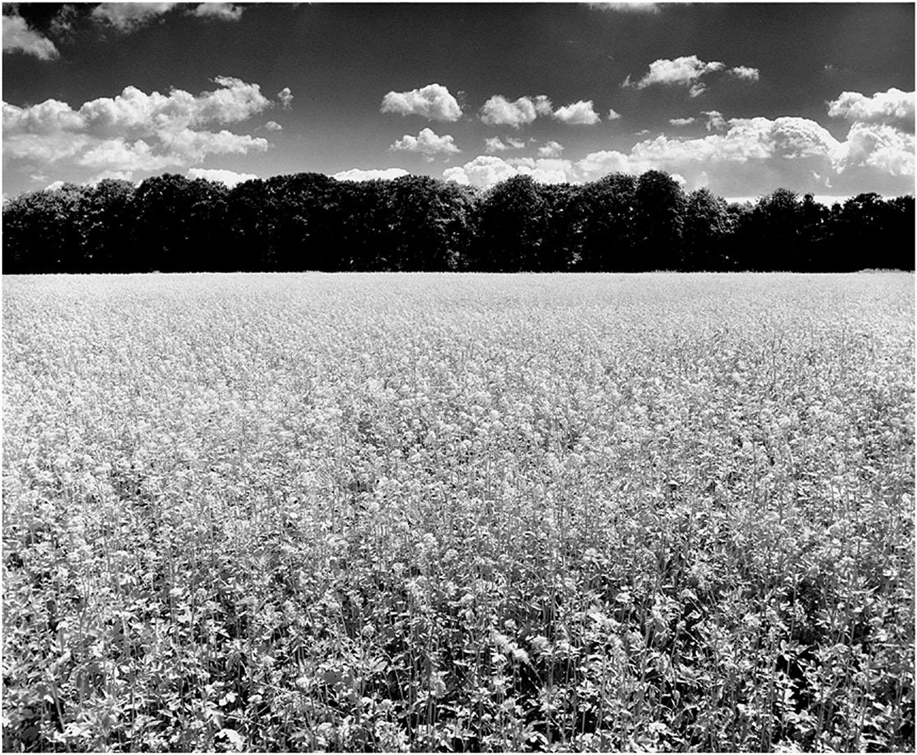 Muensterland_008_L3.79