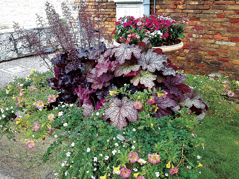 Plants_006_I16.13.30
