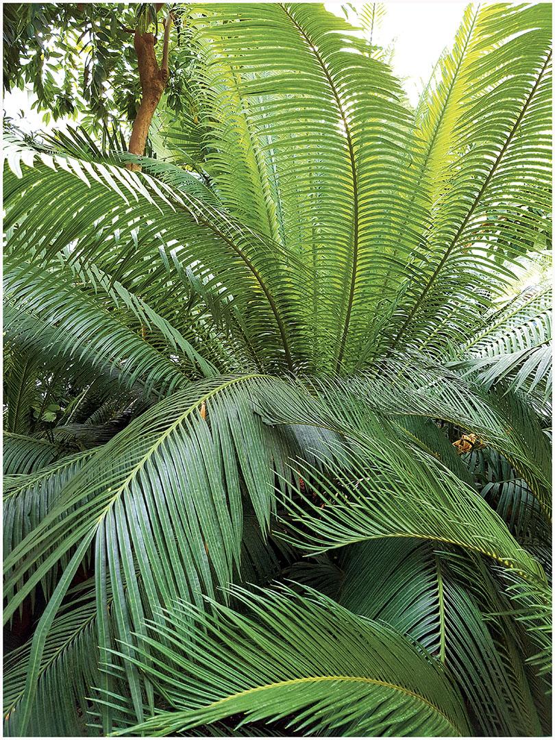 Plants_020_I16.17.2