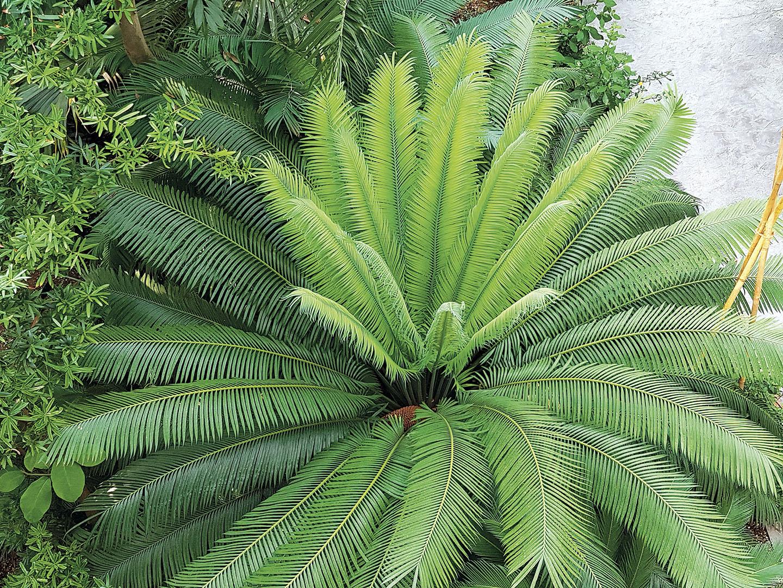 Plants_022_I16.17.8
