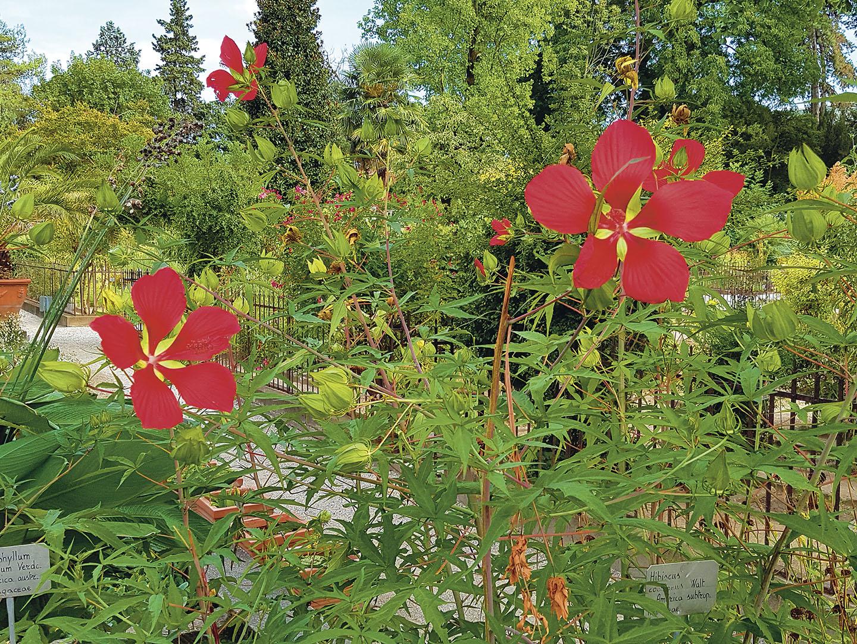Plants_045_I16.17.23