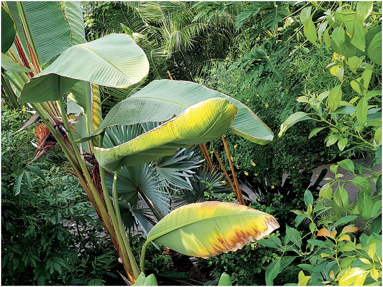 Plants_070_I16.16.80