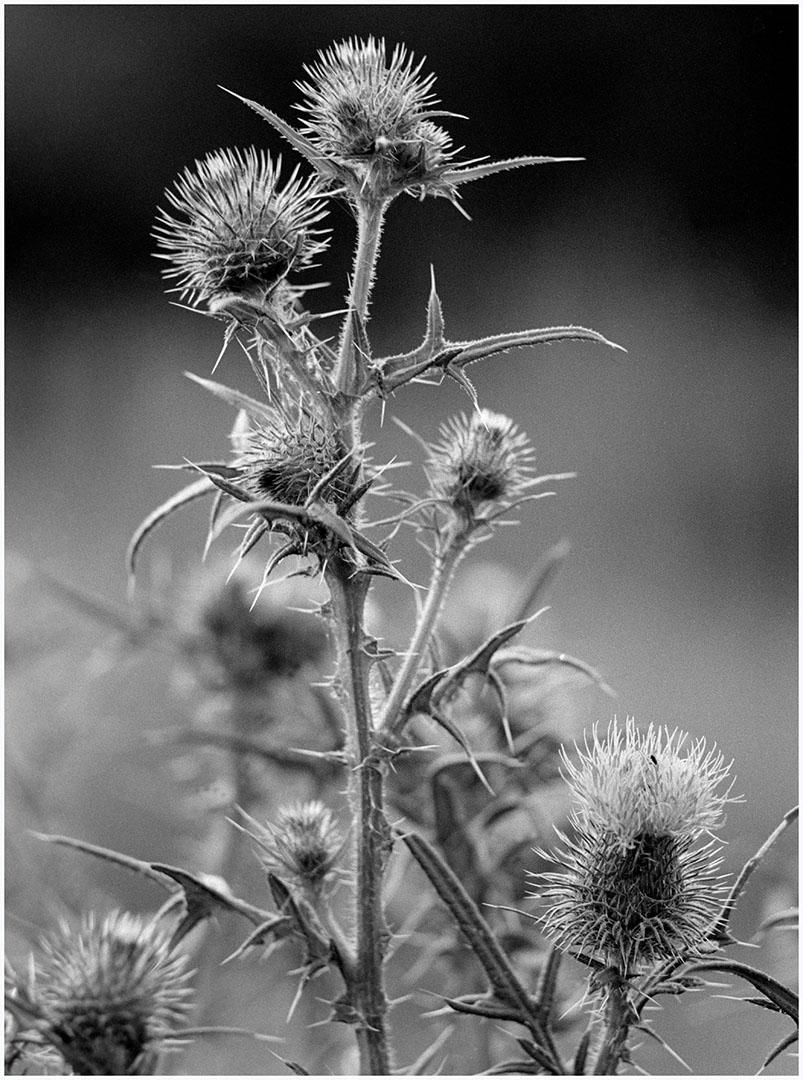 Plants_105_N1.81