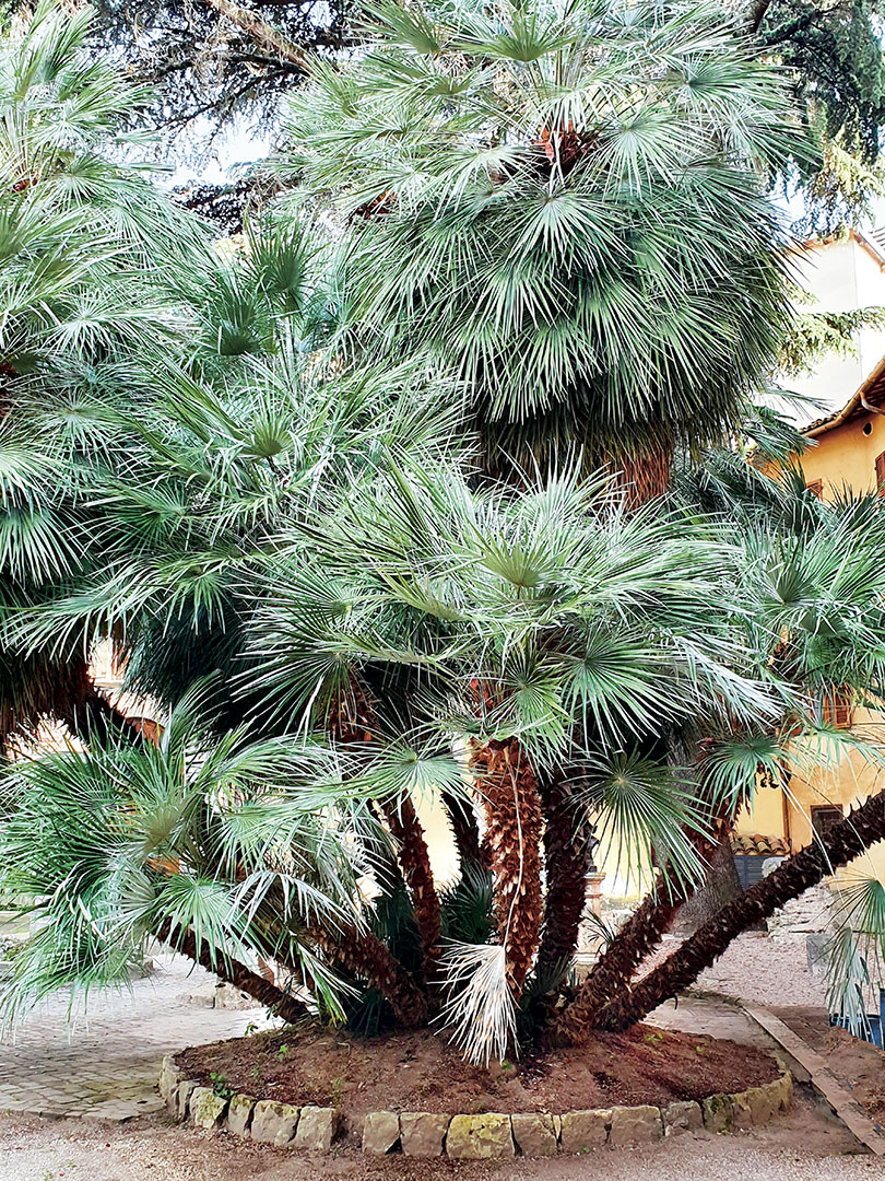 Trees_009_I19.10.76