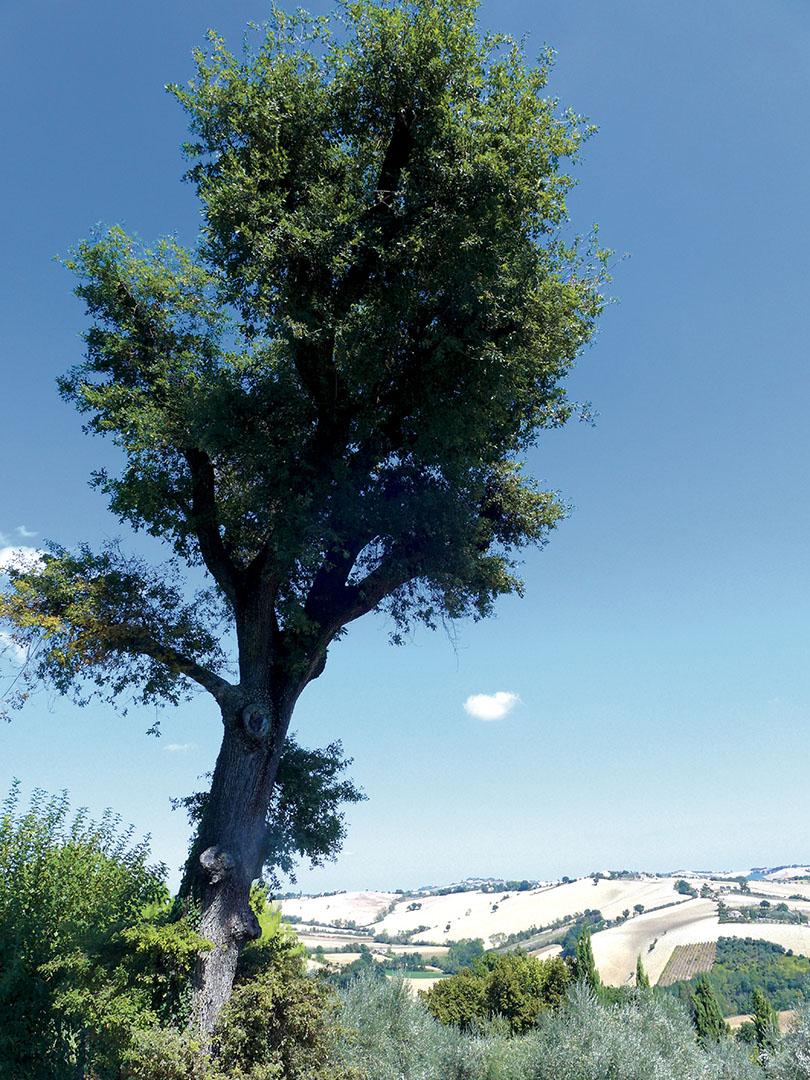 Trees_061_I15.24.37
