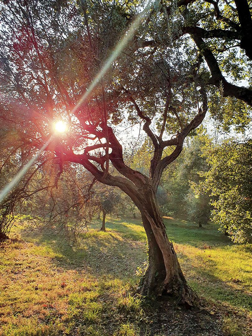 Trees_124_I19.25.41