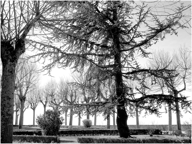 Trees_147_I15.1.95