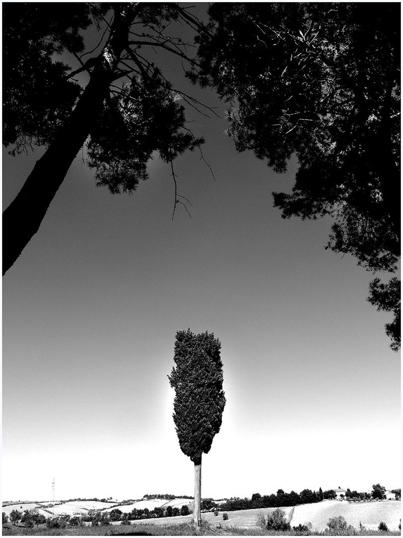 Trees_151_I15.24.62
