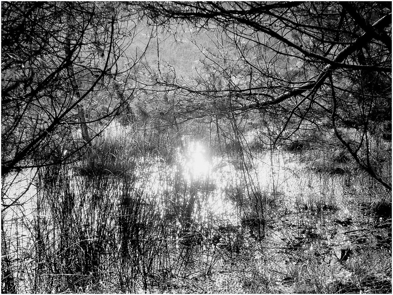 Trees_214_M14.1.57
