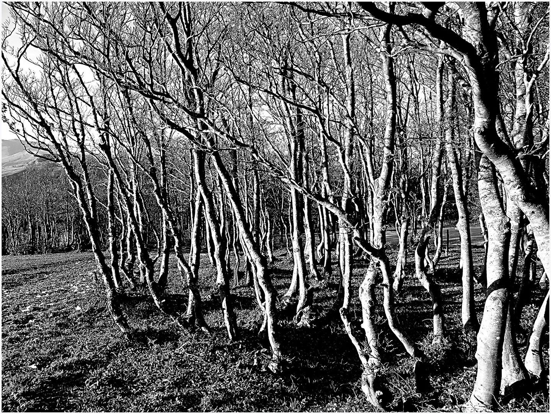 Trees_220_I07.9