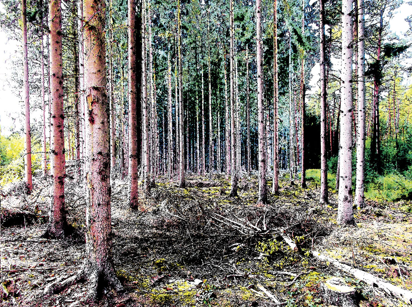 Trees_243_M13.1-32