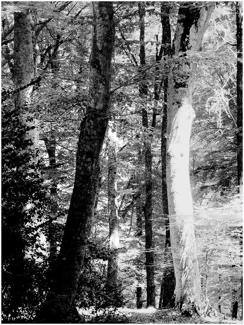 Trees_262_I15.13.34