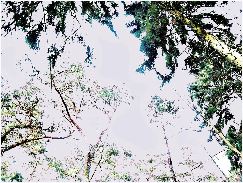 Trees_317_MLXY19