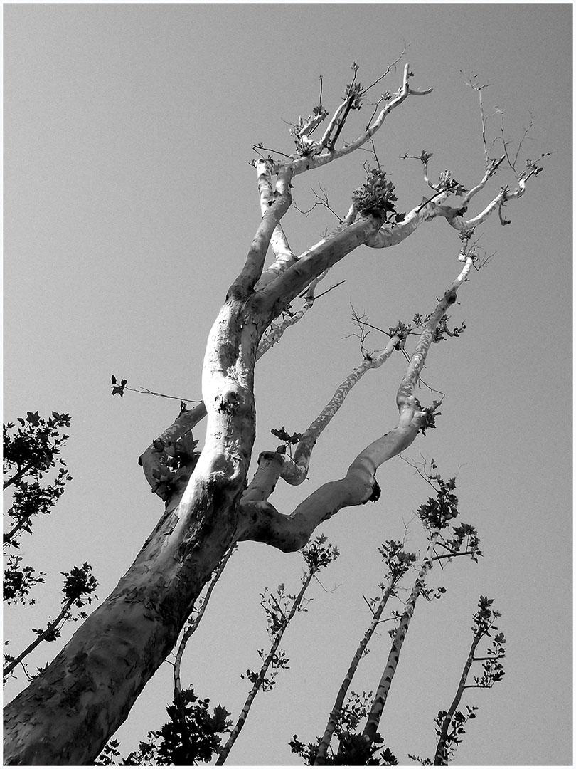 Woods_002_I14.15.4