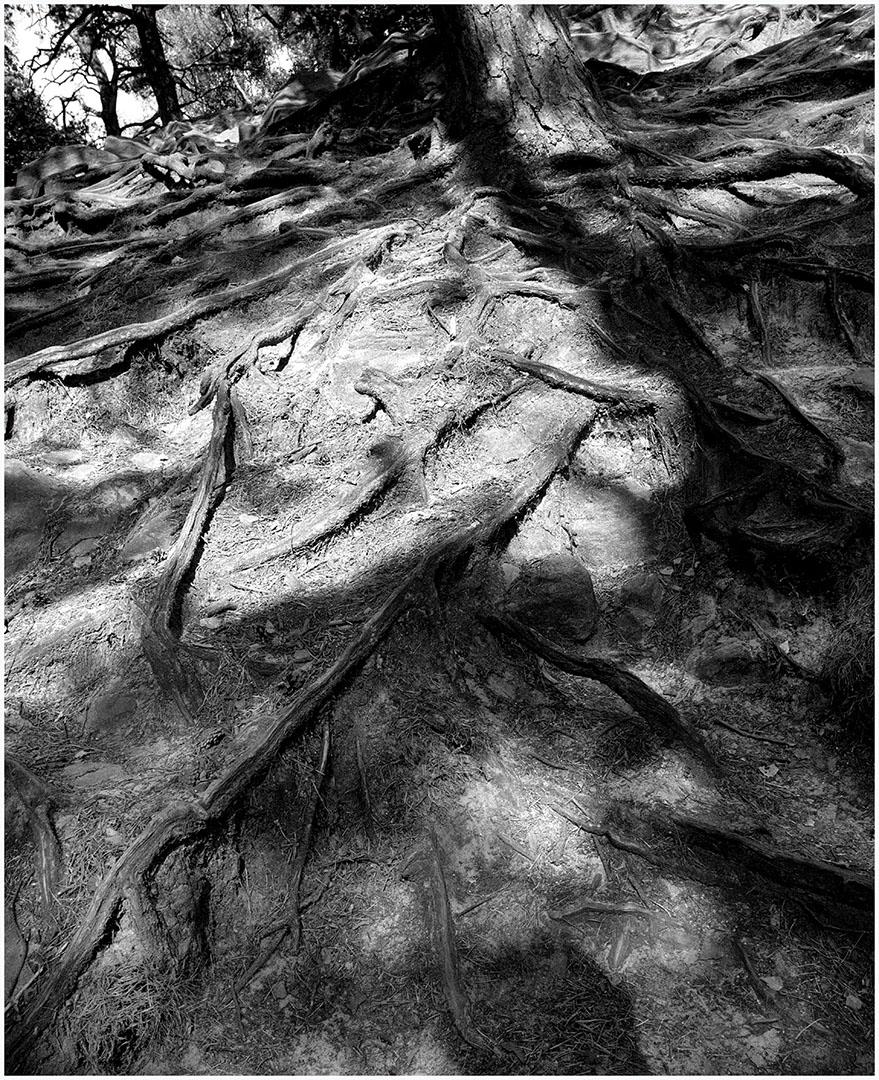 Woods_024_N2.28